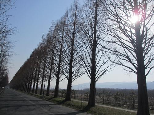 2013-03-068.JPG